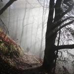 Monatsfoto: »Wald«
